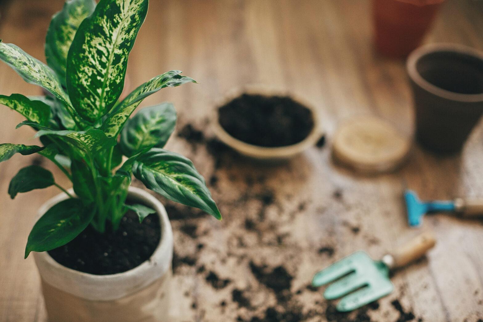 Die 5 häufigsten Fehler bei der Pflanzenpflege
