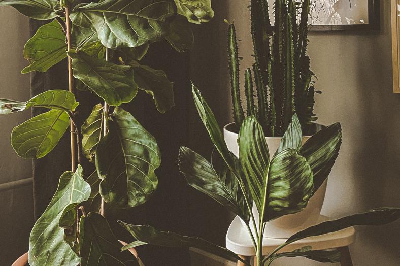 Der Winter naht – So überwinterst du deine Zimmerpflanzen richtig