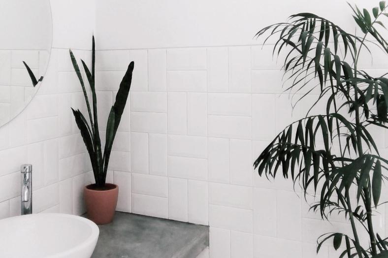Die 11 besten Pflanzen fürs Badezimmer