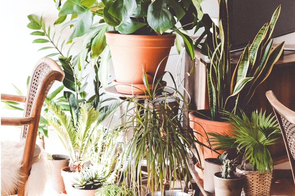 Viele prächtig blühende Pflanzen