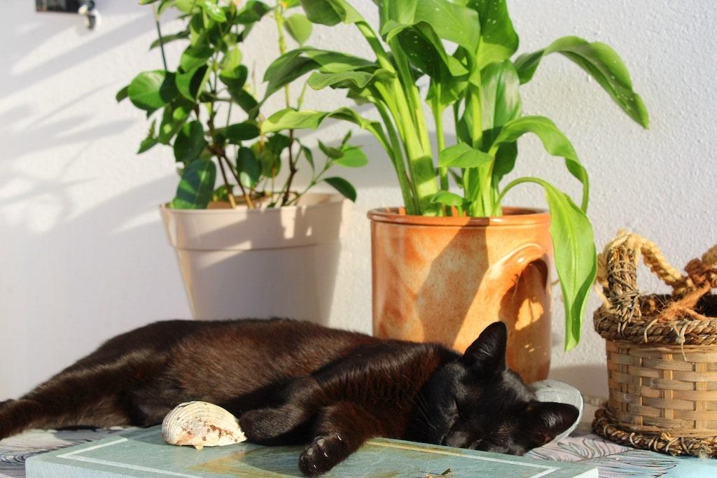 schlafende Katze liegt vor 2 Pflanzen