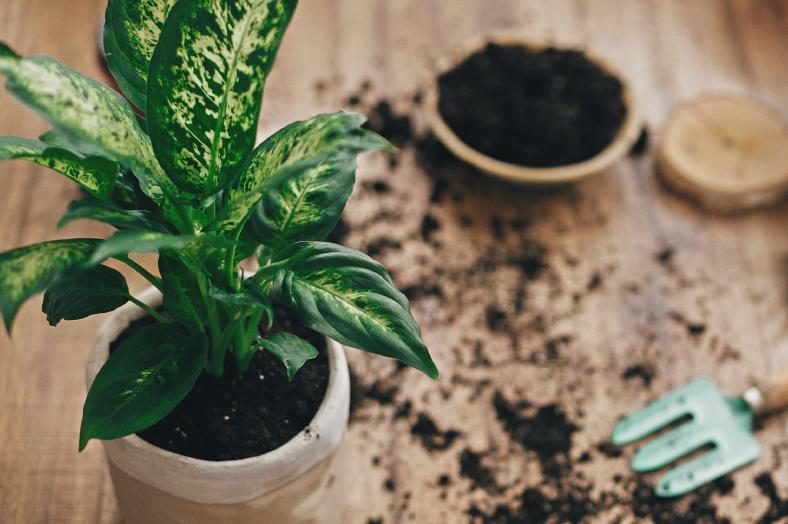 Welche Erde eignet sich für welche Pflanze?