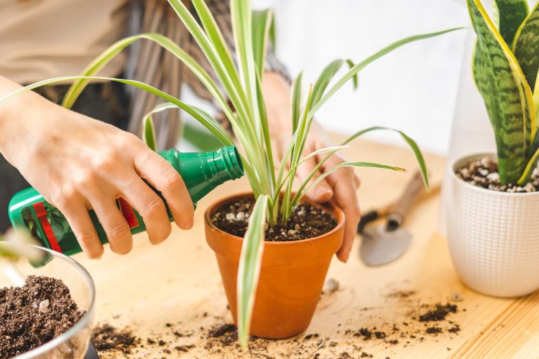 Zimmerpflanzen richtig düngen
