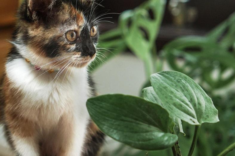 Katze neben Pflanzen